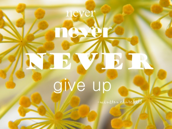 never give up/insight from a woman's heart