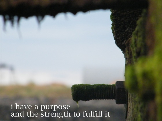 purpose/insght from a woman's heart