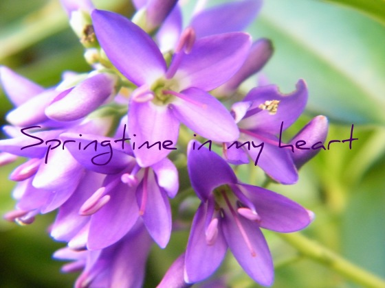 springtime in my heart/insight from a woman's heart